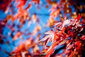 autumn-170976_1280